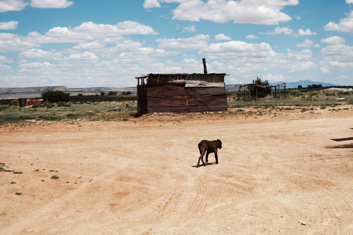 A dog walks by homes in the town of Thoreau on June 6th, 2019. Rising temperatures associated with global warming have worsened drought conditions on Navajo Nation lands over recent decades.