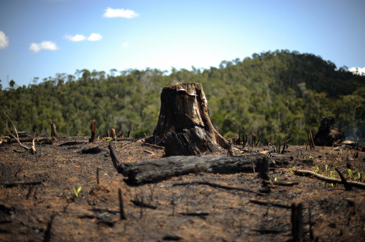 A tree stump sits in a patch of secondary forest that was burned down to make way to a field of rice near Andasibe in southwest Madagascar.