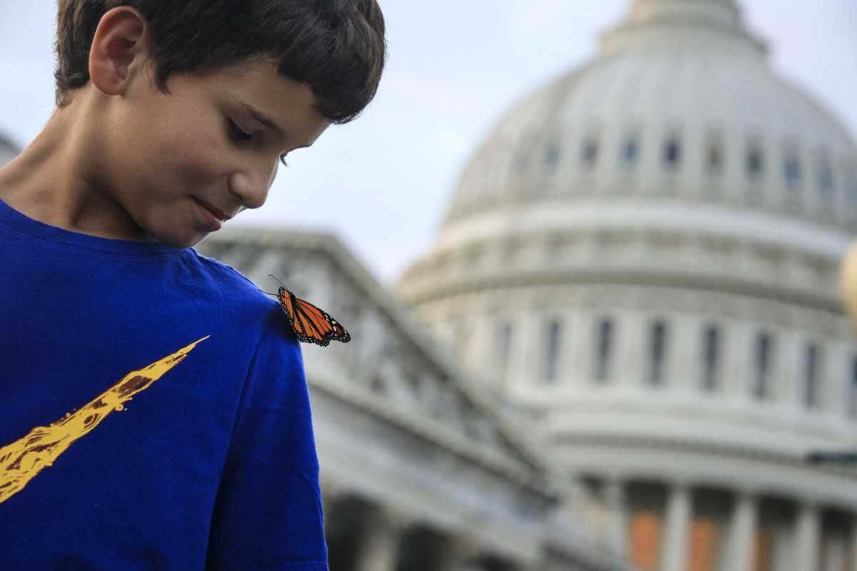 A monarch butterfly lands on a boy's shoulder.