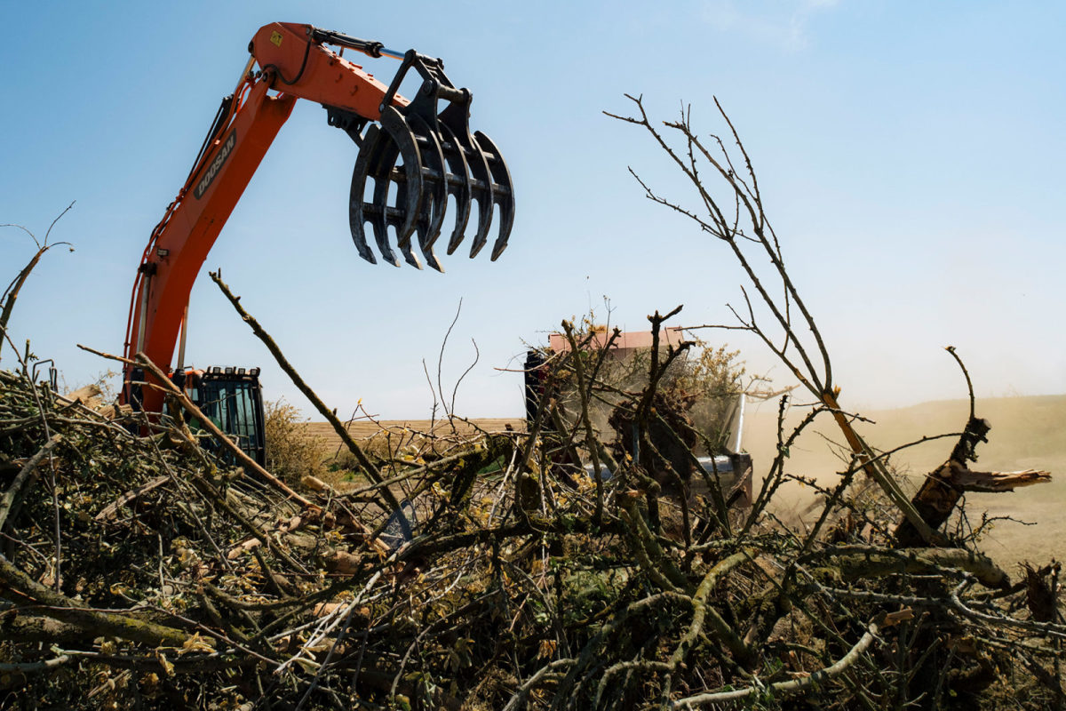 Orchard being torn down by the Fowler Brothers Farm Management company.