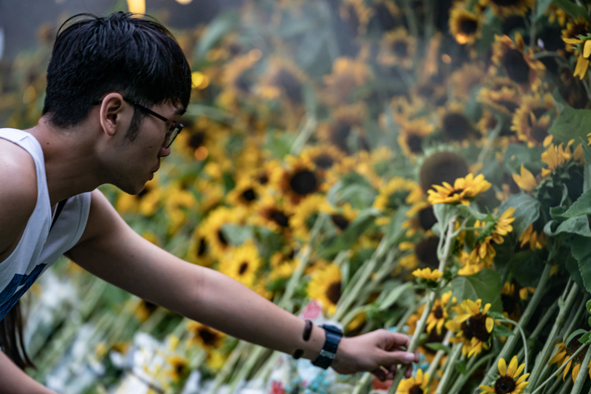 A man places a sunflower on stage to pay his respect during a memorial service on July 11th, 2019, in Hong Kong. The service was held for a man who plunged to his death while protesting against the controversial extradition bill.