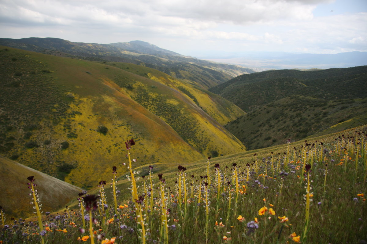 Carrizo Plain National Monument in California is run by the Bureau of Land Management.