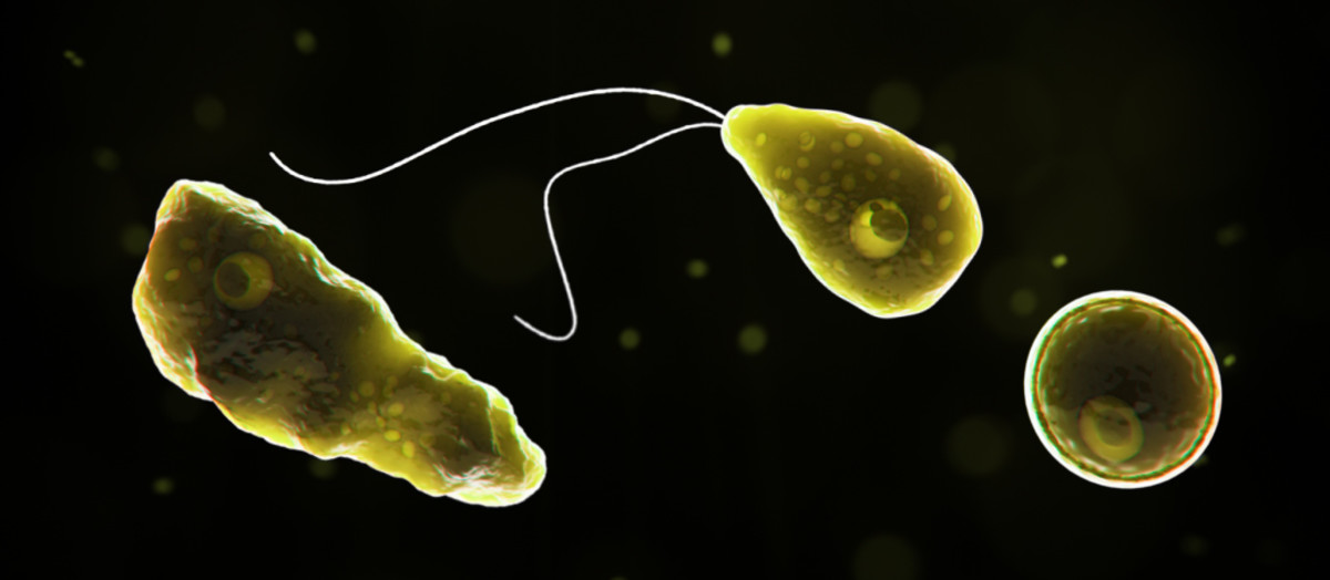 Computer-generated representation of the amoeba Naegleria fowleri, which causes deadly brain infections.