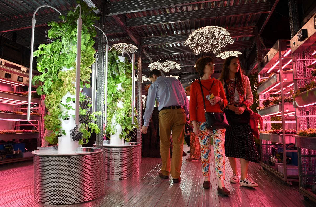 Visitors look at vegetables growing under artificial light on a vertical farm, in the IKEA: Gardening Will Save the World garden, in London on May 20th, 2019.