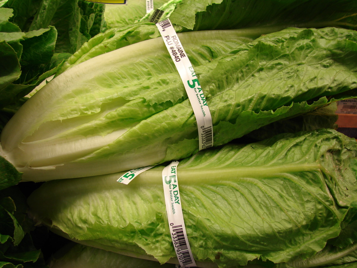 A recent E. coli outbreak linked to romaine lettuce caused at least 65 people in the United States and Canada to fall ill.