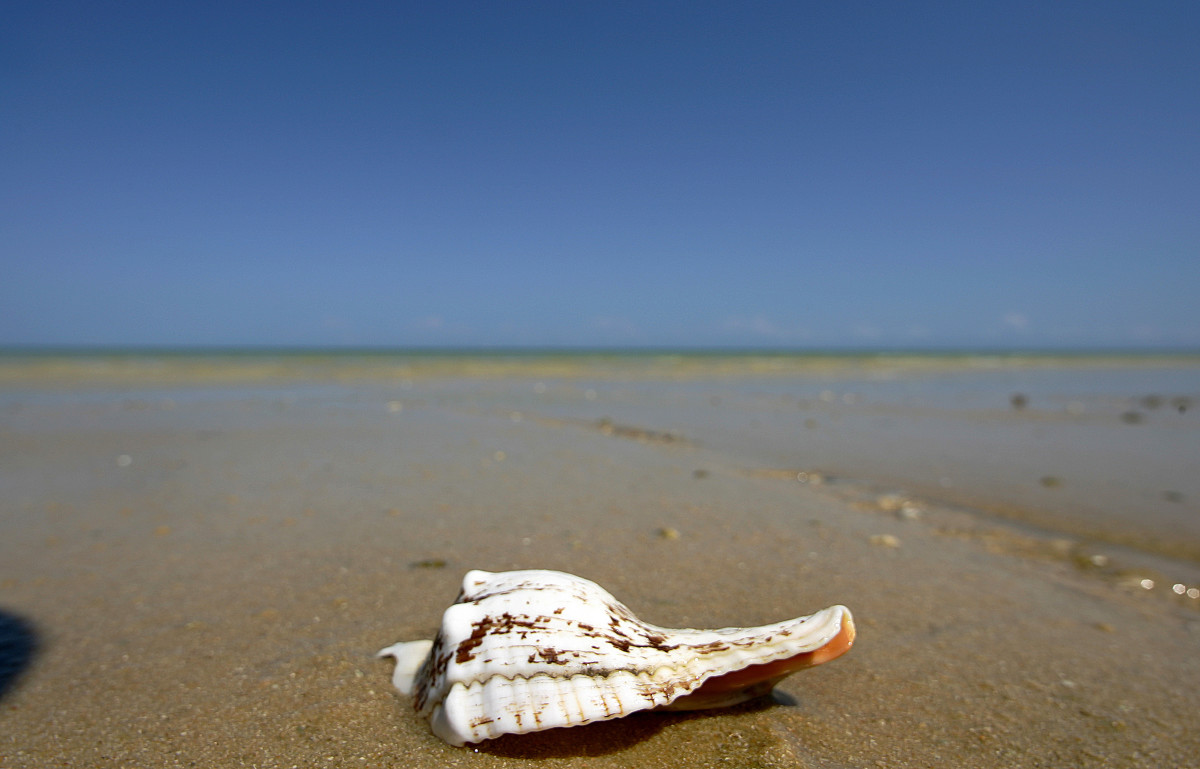 View of sea shell on a beach in Tulear, south west of Madagascar.