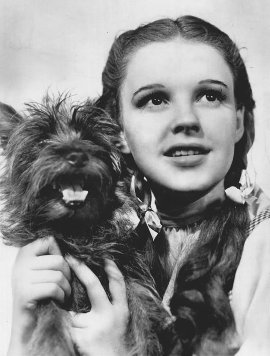 Terry, as Toto, with Judy Garland in The Wizard of Oz.