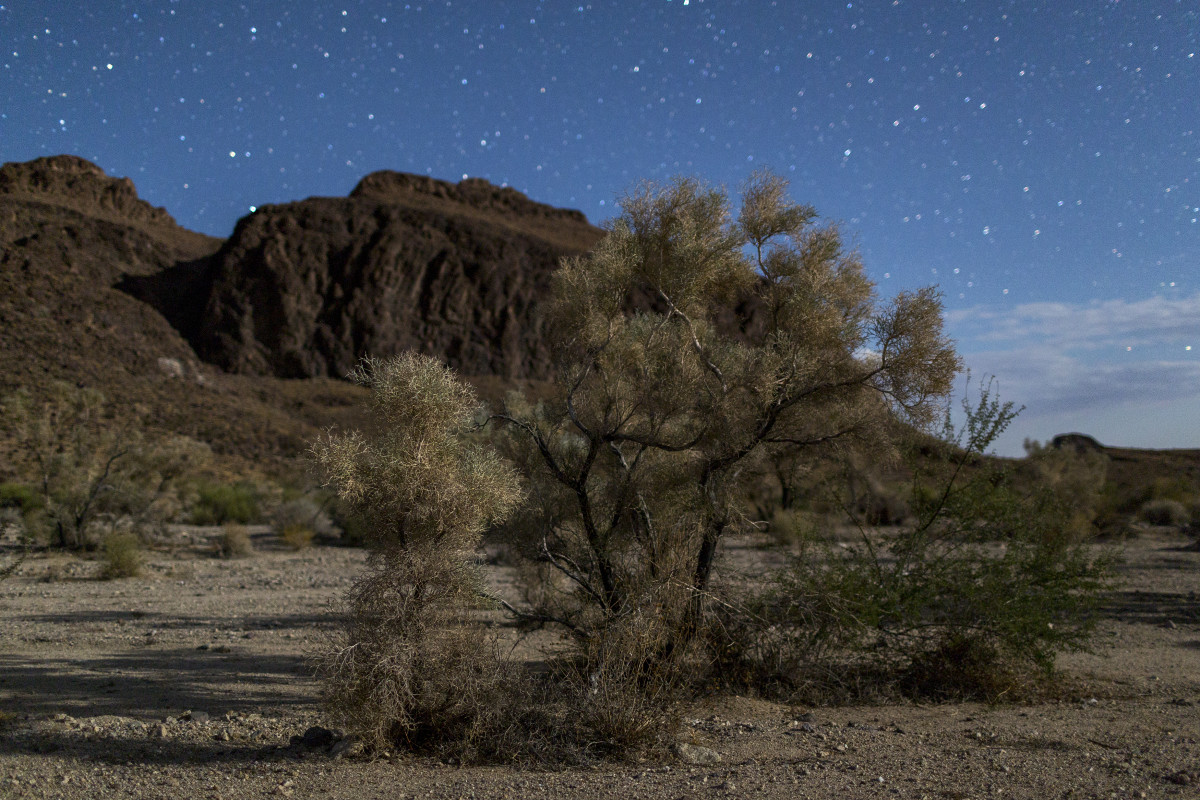 A desert smoke tree is illuminated by half-moon light in the Trilobite Wilderness region of Mojave Trails National Monument near Essex, California.