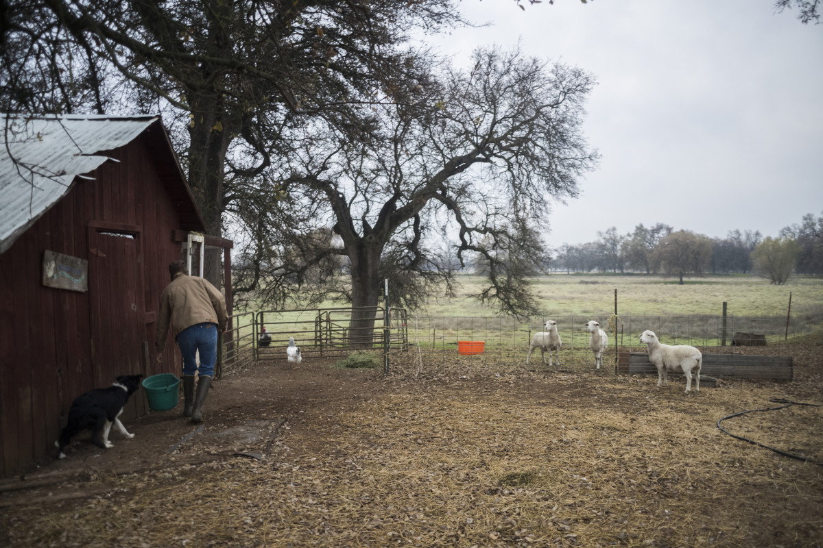 Owens cares for the livestock on her ranch in Los Molinos, California.