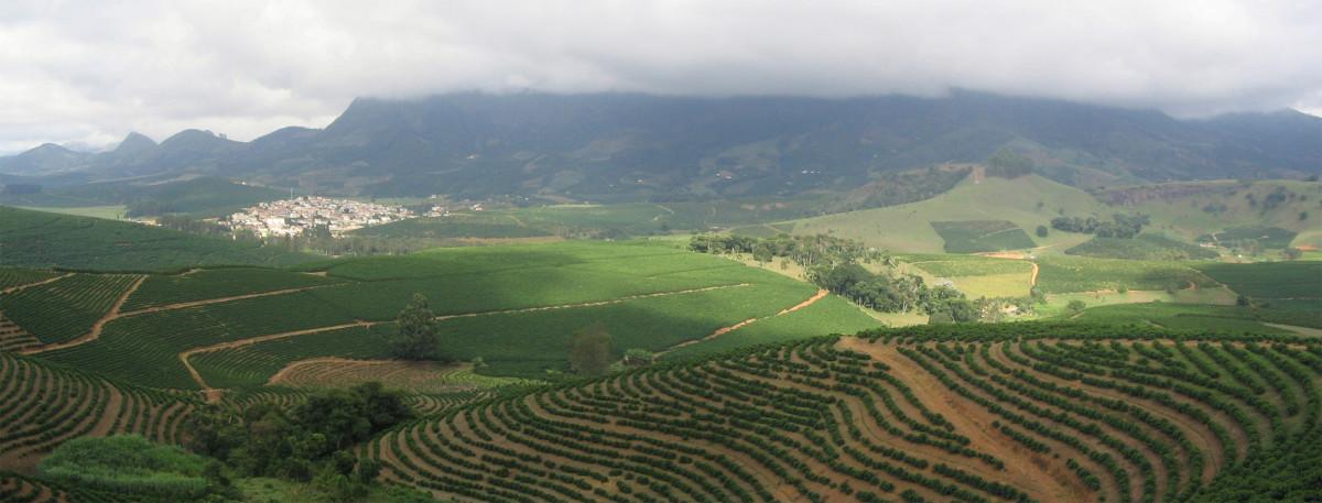A coffee plantation in São João do Manhuaçu, Brazil.
