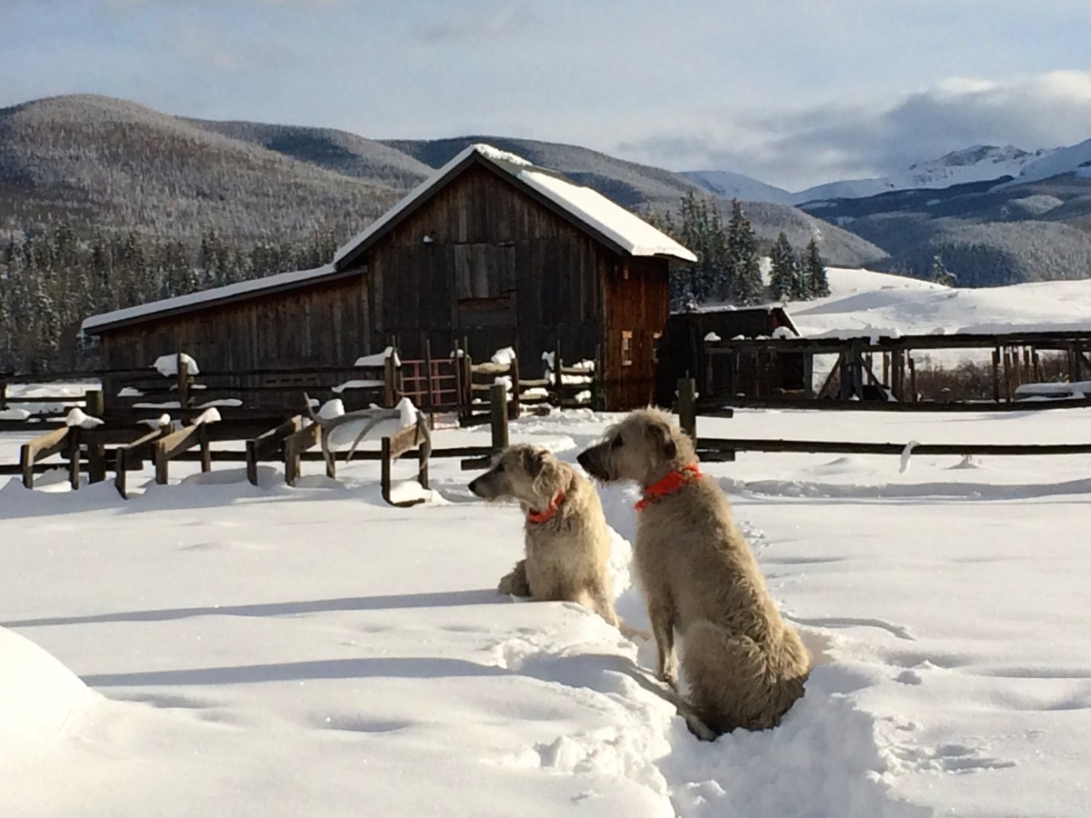 Pam Houston Irish wolfhounds Colorado