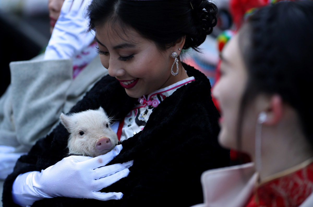 Miss Chinatown USA Jasmine Lee holds a piglet while ushering in the Chinese New Year on February 5th, 2019, in San Francisco, California. San Francisco city officials held opening ceremonies to usher in the Chinese New Year and the month-long celebration of the Year of the Pig.
