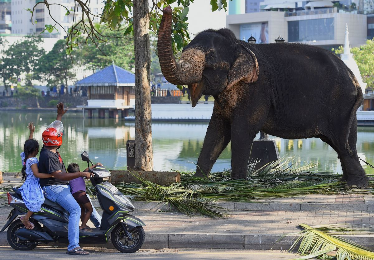 Commuters interact with an elephant as he rests on a public road ahead of the annual Navam Maha Perahera festival of the historic Buddhist Gangaramaya Temple in Colombo, Sri Lanka, on February 18th, 2019. Some 50 elephants, most of them from the central area of Kandy, along with thousands of traditional drummers, dancers, and monks, have gathered in the Sri Lankan capital to participate in the city's biggest two-day annual procession, scheduled for February 18th and 19th.