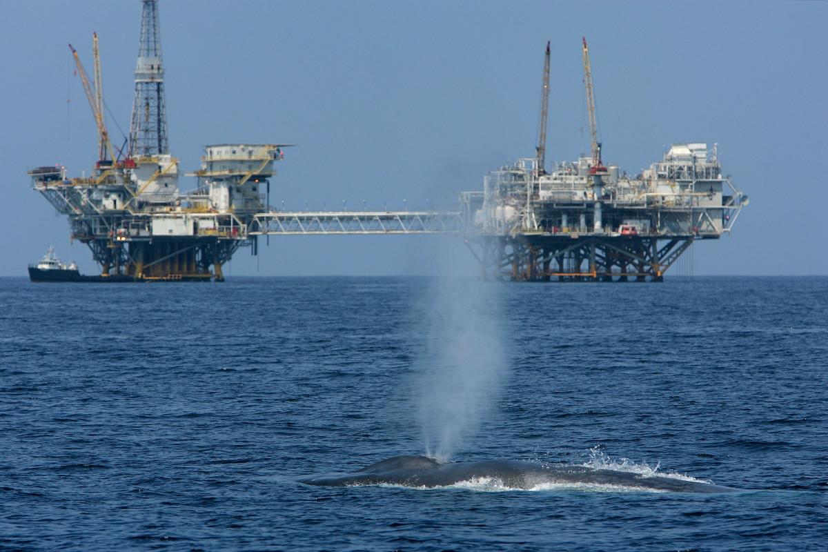 Blue whale near California coast