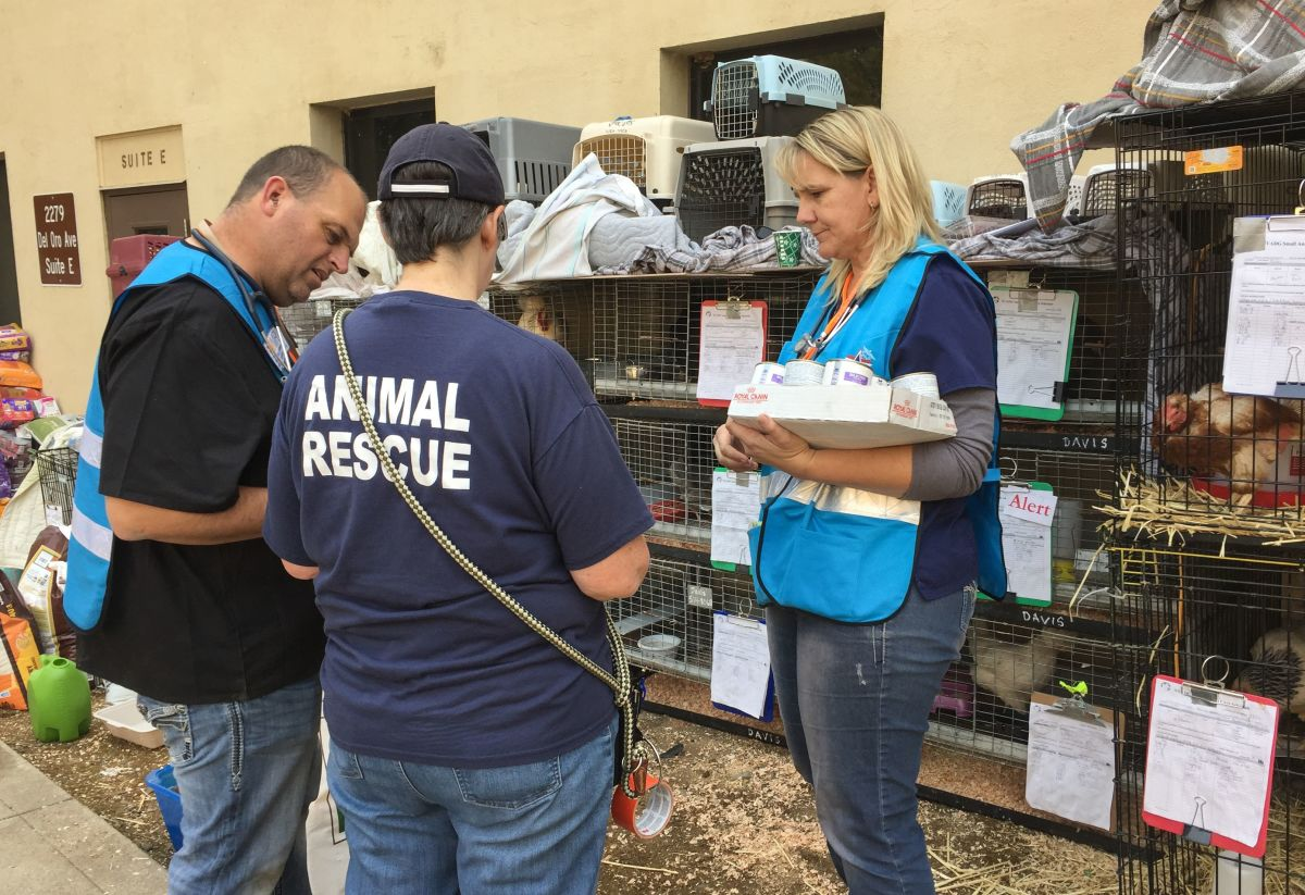 Animal service staff and veterinarians tend to animals in the Oroville shelter, south of Paradise, California, on November 16th, 2018.