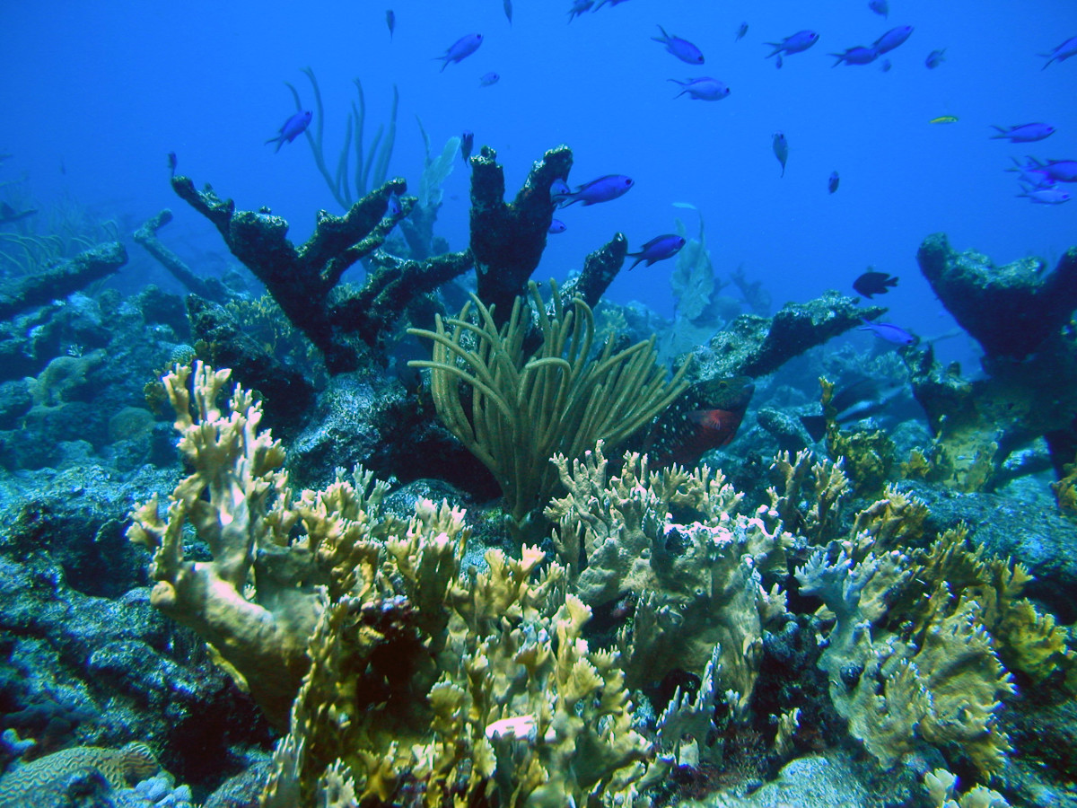 A reef scene off of St. Croix, U.S. Virgin Islands.