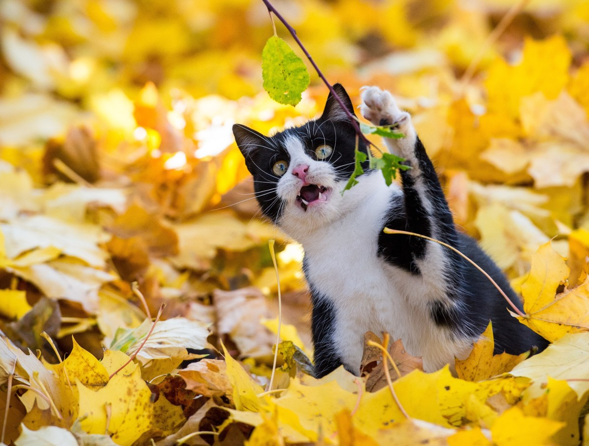 A cat attacks a leaf.