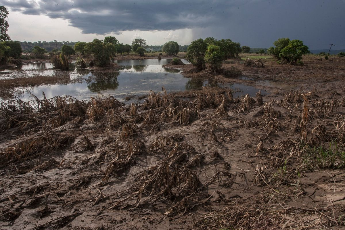 This picture, taken on March 15th, 2019, shows a maize field destroyed by floods in Chikwawa district, Southern Malawi.