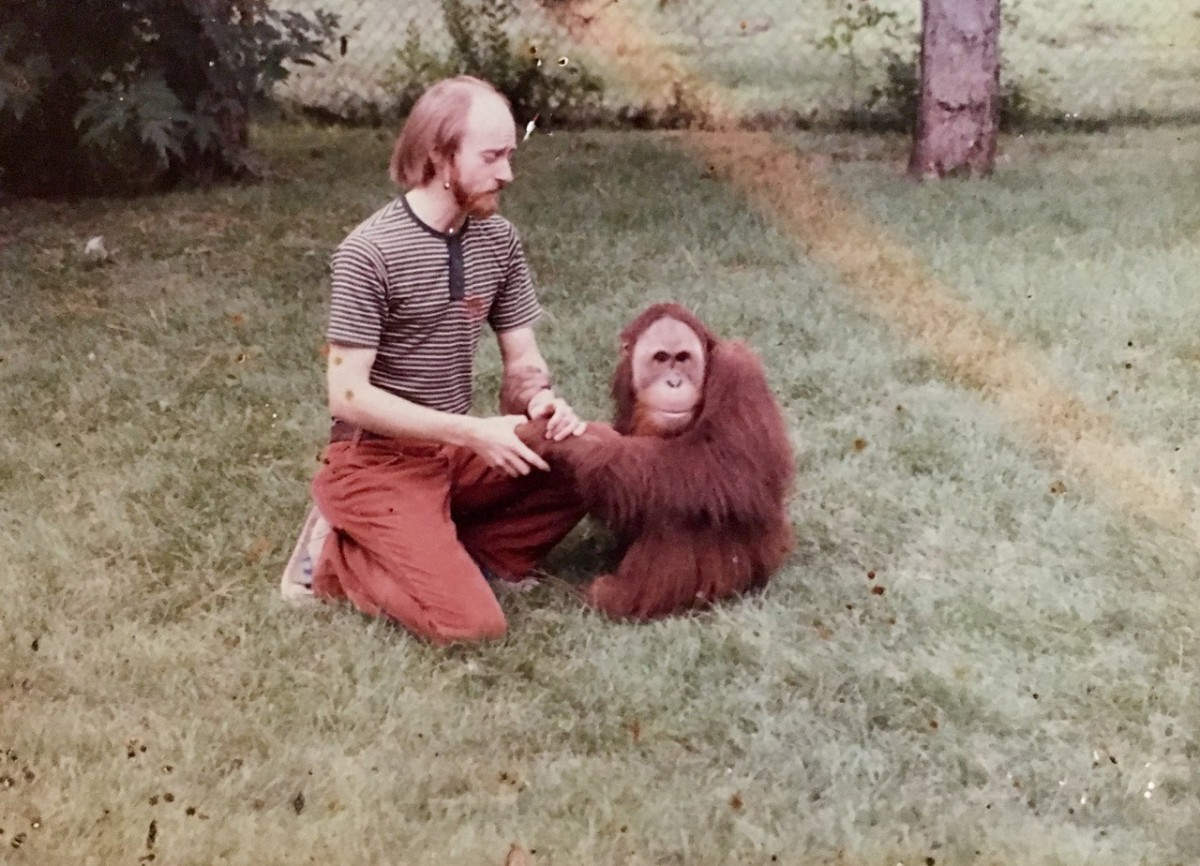 A young Dick Haskin, recently graduated from the University of Nebraska–Lincoln, works with Chewy, a sumatran orangutan, at the Lincoln Children's Zoo.