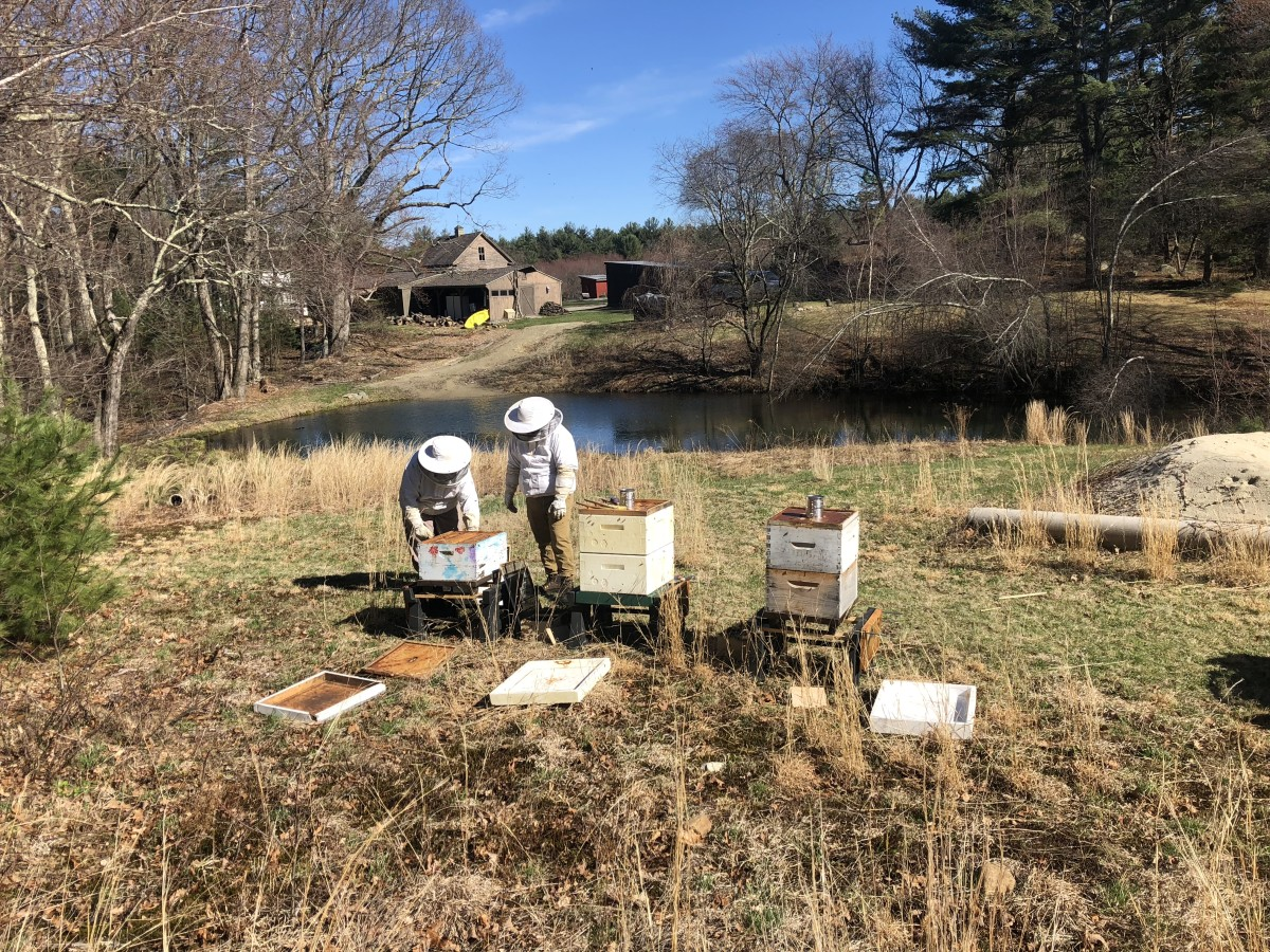 Wahya Wolfpaw and Anne Kelty keeping bees at Global Village Farm.