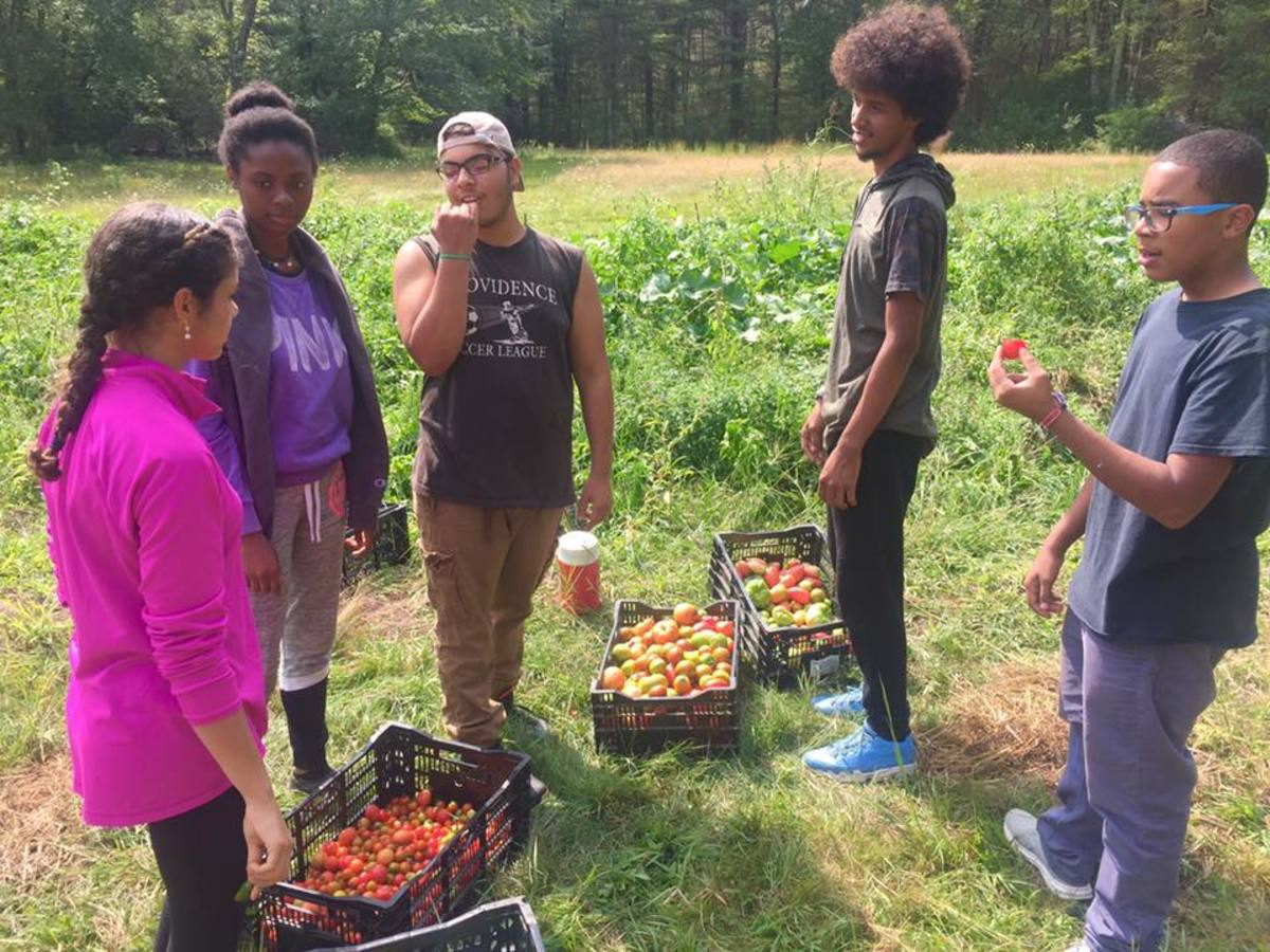 Youth members of the Community Environmental College from the Environmental Justice League of Rhode Island help with Global Village Farms harvest.